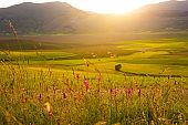 Beautiful wild flowers in sunlight in summer