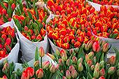 Many tulip flowers on sale in a Dutch shop