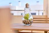 Transparent light bulb glass vase with green plant inside