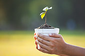 Woman hand holding young seedling in the flowerpot for prepare plant on ground