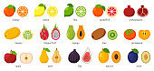 Large collection of tropical, exotic, citrus fruits with names. Set of cutaway fruits. Pairs of fruit, whole and cut in half. Flat vector illustration. Design elements isolated on a white background