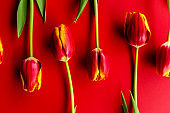 Banner with a bouquet of red tulips on red background. Flat lay with flowers, top view with copyspace. International Women's Day, Mother's Day concept. Valentines, spring background. floral mock up.