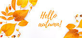 Banner autumn leaves and fruits and berries on a white background, hello autumn, layout for design with place for text.