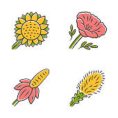 Wild flowers color icons set. Helianthus, California poppy, mexican hat, liatris. Blooming wildflowers, weed. Spring blossom. Field, meadow flowering plants. Isolated vector illustrations
