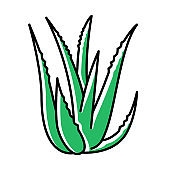 Aloe vera green color icon. Succulent growing sprouts. Cactus leaves and thorns. Medicinal herb for skincare. Decorative plant.. Ingredient for organic cosmetic. Isolated vector illustration