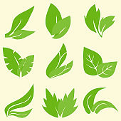 Green leaf icon. Set of green leaves isolated on white background. Vector, cartoon illustration. Vector.
