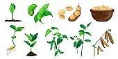Soybean icons set, cartoon style