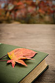 November 12. 2019. Republic of Korea. Autumn and book