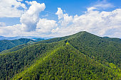 Aerial drone view of green mountain, pine forest, river and village. Vyzhnytsya, Carpathian, Ukraine.