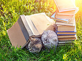 Couple of cute clever cats lying on the grass near pile of books in summer on a sunny day. Cats covered with big grunge book