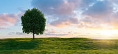 Beautiful sunset landscape with lone tree stands in a green field, copy space for individual text