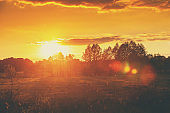 Rural landscape in the evening at sunset. Field with trees against evening golden sky. Sunset in the countryside