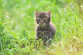 Portrait of a little kitten sitting on the grass in a spring garden