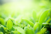 Closeup beautiful view of nature green leaves on blurred greenery tree background with sunlight in public garden park. It is landscape ecology and copy space for wallpaper and backdrop.