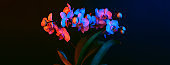 Bright orchid flowers are phalenopsis illuminated by neon light on a black background