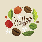Vector graphic coffee tree plantation, branch, leaf, bean.