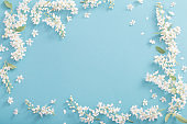 bird cherry flowers on paper background