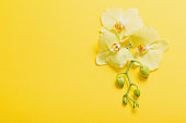 orchids flowers  on yellow paper background
