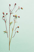 wild avens flowers on paper background
