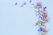 spring flowers on blue background