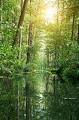 Forest river landscape against sunlight