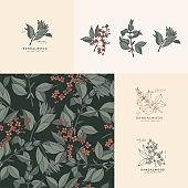 Vector illustration sandalwood branch - vintage engraved style. Logo composition in retro botanical style. Seamless pattern.