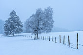 winter landscape on foggy day with falling snow