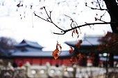 Changdeok Palace Seoul Korea stock photo