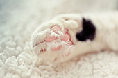 cat's paw with pads and fingers lying on the rug