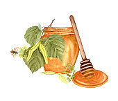 Watercolor honey jar and green linden twig, wooden honey dipping. Hand drawn organic food illustration isolated on white background. Linden honey