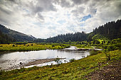 Mountain river landscape in summer, outdoor travel background, Transcarpathia (Zakarpattia), Ukraine