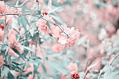 Beautiful flowers made with color filters. Flower garden. - Image