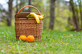 picnic basket close-up on a background of defocused forest