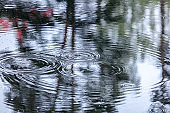 rain drops rippling in a puddle with sky and trees reflections