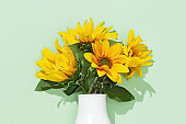 Autumn flower of sunflower in white vase on mint colored background. Natural bright yellow blossom with green leaves.