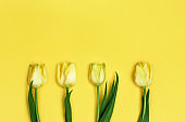 Four blooming yellow flowers tulip on paper background with copy space. Spring flowers for holiday, Womens or Mothers day. Flat lay.