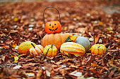 Variety of colorful pumpkins lying on the ground