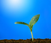 Young sprout reaches out to the sun against the blue sky