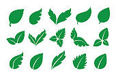 Green leaves icons collection. Plant leaf set. Vector decoration elements.