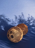 Two coconuts in a sunlight with a creative shadows through plant leaves.