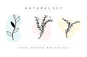 Vector set of hand drawn botanical plants. Three types of black plants. Beautiful herbaceous plants on a white background.