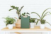 Modern set of plants in modern flowerpots at home interior. Modern home decor. Home office workplace