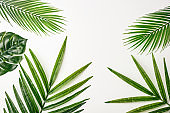 Summer composition. Tropical palm leaves on white background. Summer concept. Flat lay, top view, copy space. Stock Photo