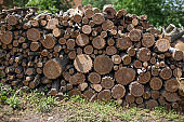 texture of wood log pile,  background