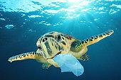 Sea Turtle and underwater plastic