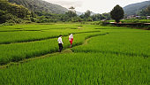 Aerial view of asian lover walking on rice field ridge. People taking pre wedding photography in rice terrace. Green rice farm in Nan, Thailand.