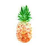 Hand drawn sketch watercolor tropical pineapple.