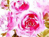 Hand drawn watercolor peonies in pink color