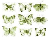 Monochrome green butterflies and moths set