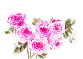 Hand drawn watercolor roses in pink color